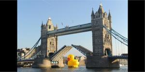 Duck  London