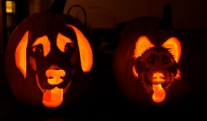 halloween , pumpkin, carving, dog, faces